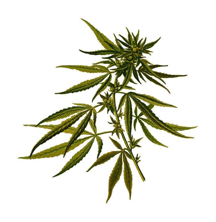 cannabis singapore