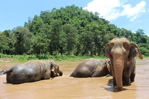 thai rehab elephant excursion in chiang mai