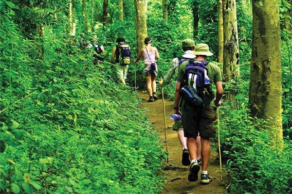 Chiangmai province jungle treck