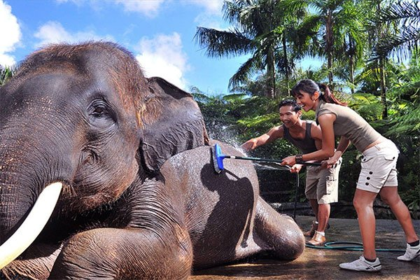 elephant being cleaned by young couple